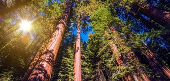 Fully Funded Scholarships In Forestry At Canterbury University in New Zealand 2019